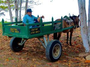 horse_pulling_wagon-300x225