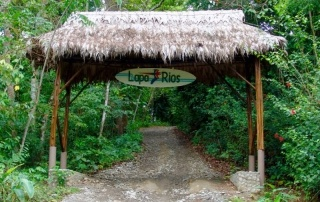 Costa Rica Rainforest | THEWANDERINGHOUSEWIFE.COM