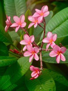 pink_flower-225x300