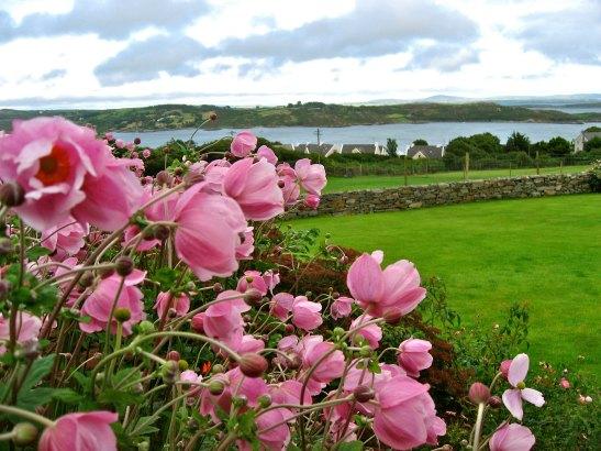 IRELAND: Schull Bed & Breakfast | THEWANDERINGHOUSEWIFE.COM