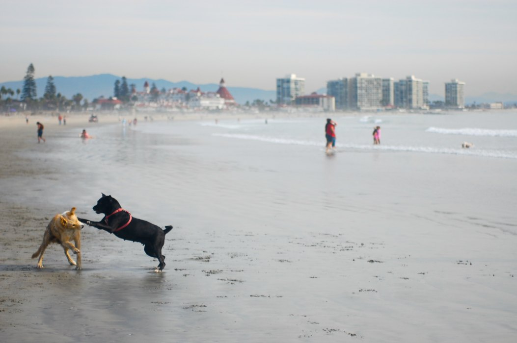 SAN DIEGO: Central San Diego Beaches | TheWanderingHousewife.com