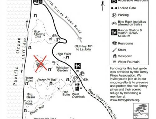 HIKING SAN DIEGO: Torrey Pines State Park