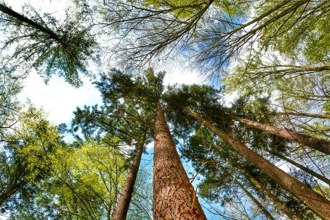 CALIFORNIA: Tree Camping in Elk | TheWanderingHousewife.com