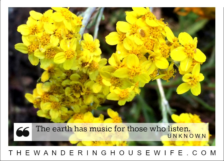 Nature quote | TheWanderingHousewife.com