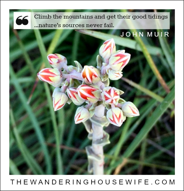 John Muir quote | TheWanderingHousewife.com